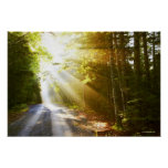 Sun Beams Through Forest in Acadia National Park Print
