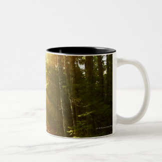 Sun Beams Through Forest in Acadia National Park Two-Tone Coffee Mug
