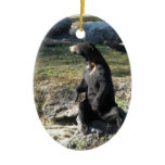 Sun Bear at the Zoo Christmas Tree Ornament