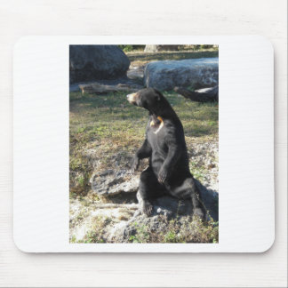 Sun Bear at the Zoo Mouse Pad