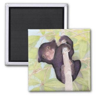 Sun Bear Cub Magnet