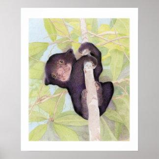 Sun Bear Cub Poster