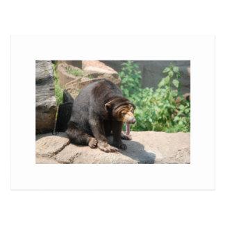 Sun Bear Post Card