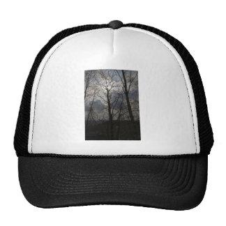 Sun behind a tree trunk trucker hat