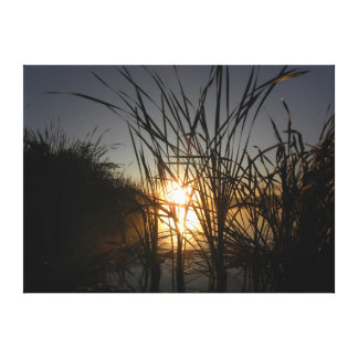 Sun Behind the Reeds Canvas Print