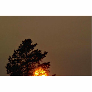 Sun Behind Tree Photo Cut Out