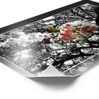 Sun besó las flores de cerezo impresión fotográfica