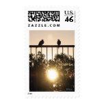 Sun Birds postage
