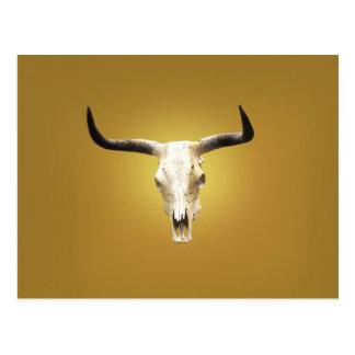 sun bleached steer skull postcard