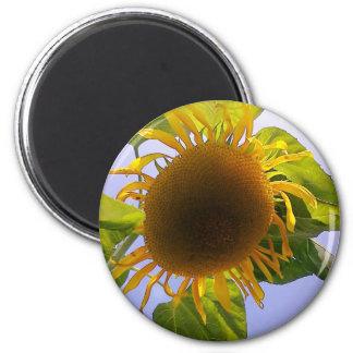 Sun bursting Sunflower 2 Inch Round Magnet