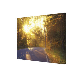 Sun bursts through the forest onto roadway at canvas print