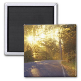 Sun bursts through the forest onto roadway at 2 inch square magnet
