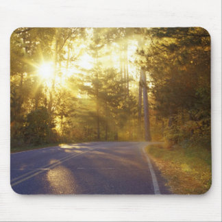 Sun bursts through the forest onto roadway at mouse pad
