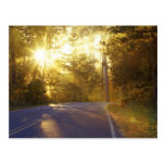 Sun bursts through the forest onto roadway at post cards