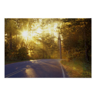 Sun bursts through the forest onto roadway at poster