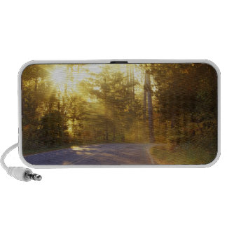 Sun bursts through the forest onto roadway at mp3 speakers