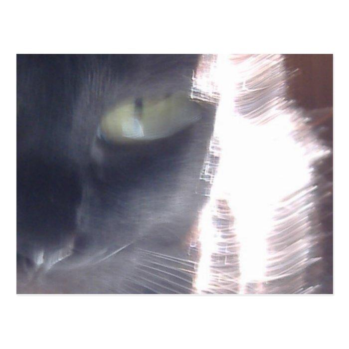 Sun-Cat Glare Postcard