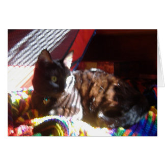 Sun-Cat Returns Card