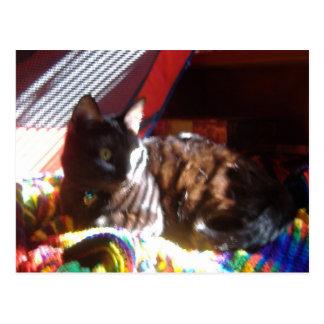Sun-Cat Returns Postcard