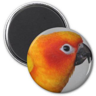 Sun Conure 2 Inch Round Magnet