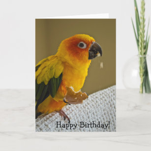 Sun Conure Cards Zazzle