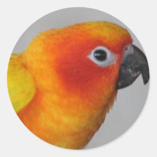 Sun Conure Classic Round Sticker