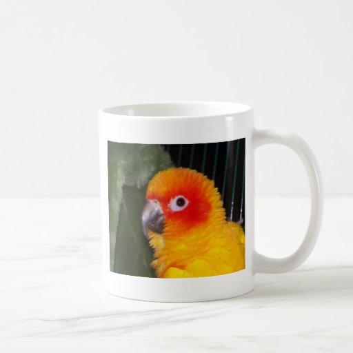 Sun Conure Mugs