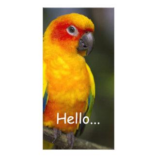 Sun Conure Parrot Photo Card