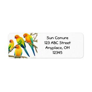 Sun Conure Parrots Label Return Address Label