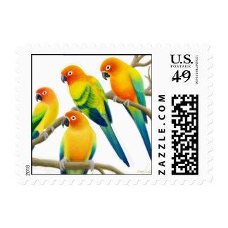 Sun Conure Parrots Postage