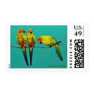 Sun Conure Postage Stamps