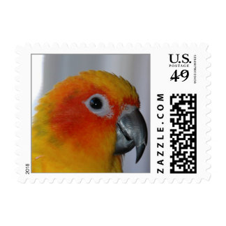 Sun Conure (Small) Postage Stamps
