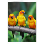 Sun Conures Greeting Card