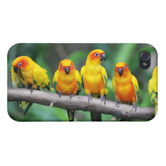 Sun Conures Cases For iPhone 4