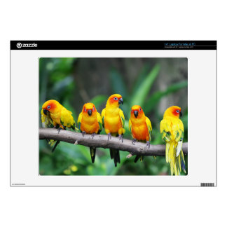 Sun Conures Decal For Laptop