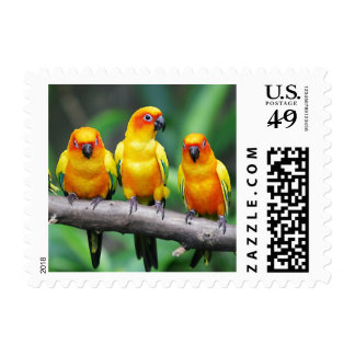Sun Conures Timbres Postales