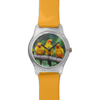 Sun Conures Watches