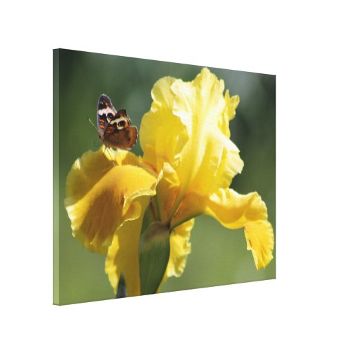 Sun Dancer Iris & Butterfly Photography Art Stretched Canvas Prints