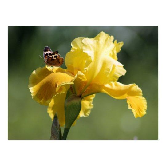 Sun Dancer Iris & Butterfly Photography Art Postcard