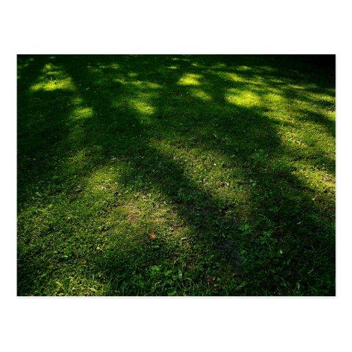 Sun Dappled Lawn Postcard