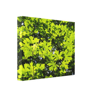 Sun-Dappled Leaves in the Forest Canvas Print