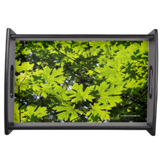 Sun-Dappled Leaves in the Forest Serving Tray