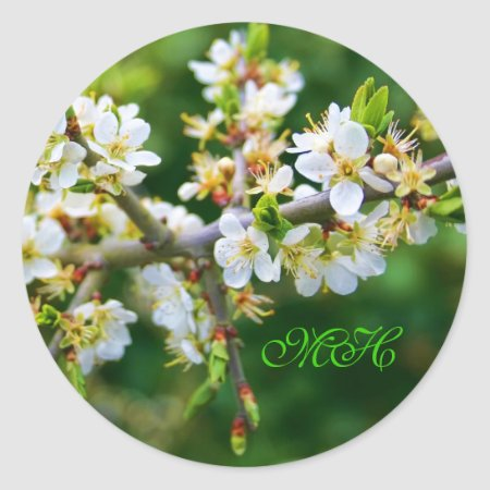 Sun-Dappled Spring Hawthorn Classic Round Sticker