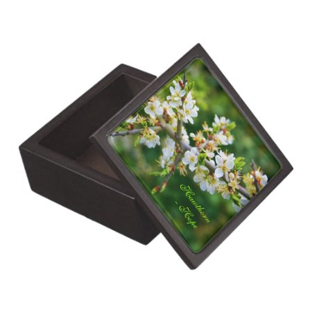 Sun-Dappled Spring Hawthorn Jewelry Box