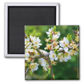 Sun-Dappled Spring Hawthorn Magnet