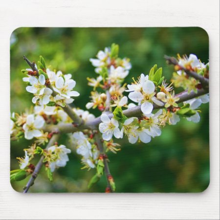 Sun-Dappled Spring Hawthorn Mouse Pad