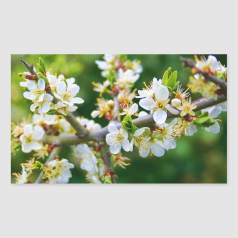 Sun-Dappled Spring Hawthorn Rectangular Sticker