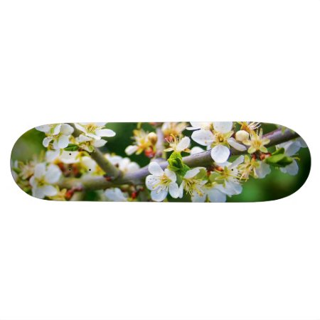 Sun-Dappled Spring Hawthorn Skateboard