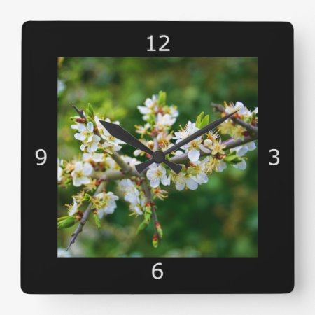 Sun-Dappled Spring Hawthorn Square Wall Clock