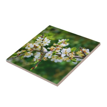 Sun-Dappled Spring Hawthorn Tile